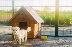 dimensioni ingresso cuccia cane